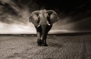 Si tu vois tout en gris, déplace l'éléphant !